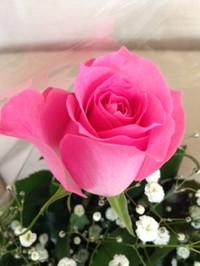 Rose2015