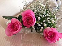Roses2015
